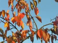 Highlight for album: 21 oktober 2007: Kew Gardens in de herfst