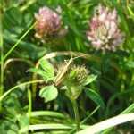 behalve vogels waren er ook erg veel insekten. De libelle's bleven helaas niet stilzitten, maar deze sprinkhaan wilde best even op de foto