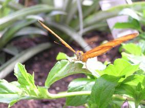 vlinder_klein.JPG